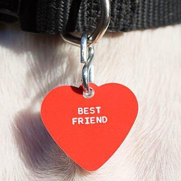 Kućni ljubimci poboljšavaju zdravlje vlasnika